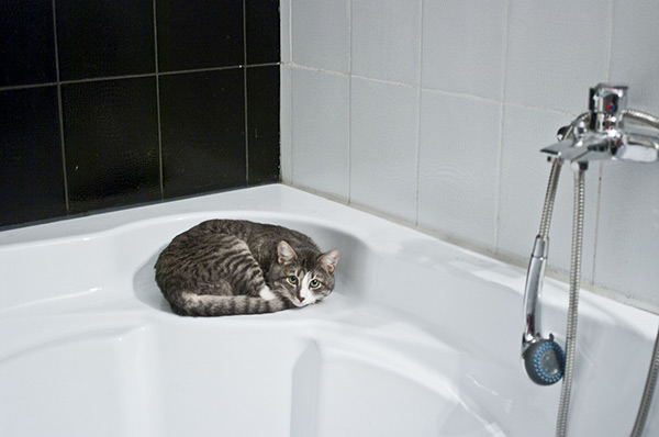 Cat sitting by the shower