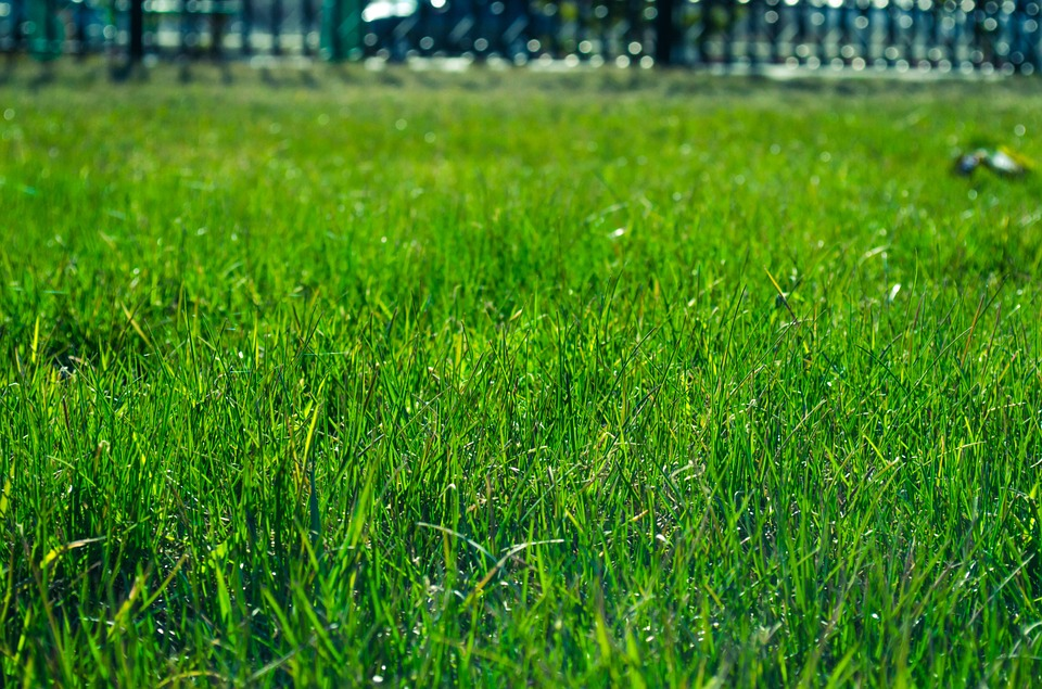 septic system enzymes for a healthy yard
