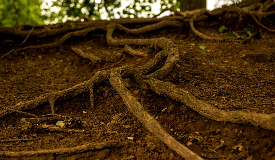 Tree roots can block your home's pipes