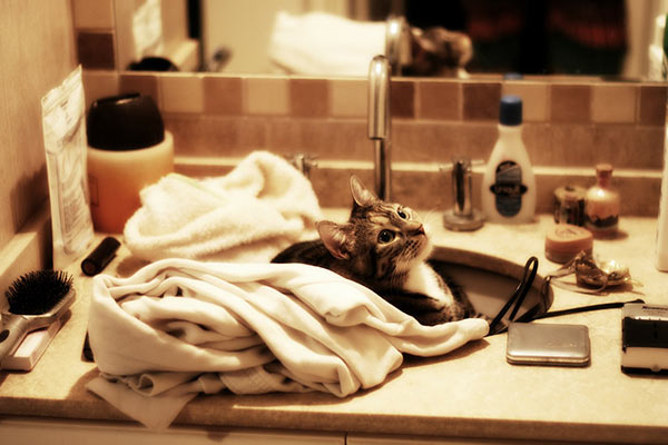 4 plumbing tips for pet owners everywhere